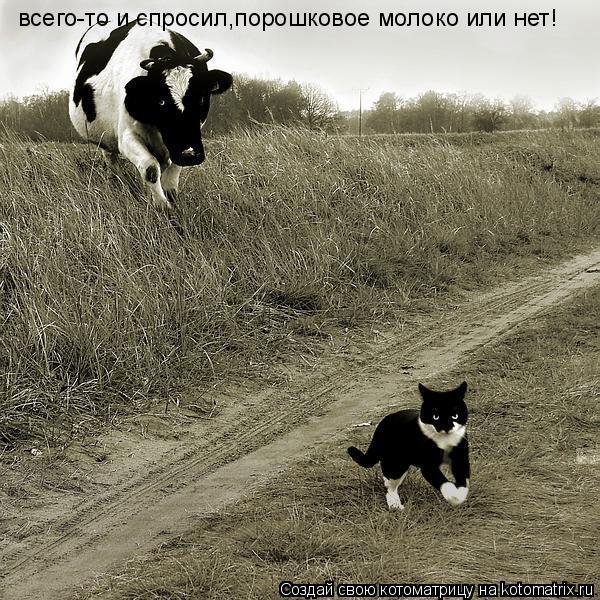 Котоматрица: всего-то и спросил,порошковое молоко или нет!