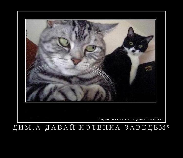 Котоматрица: Дим,а давай котёнка заведём?