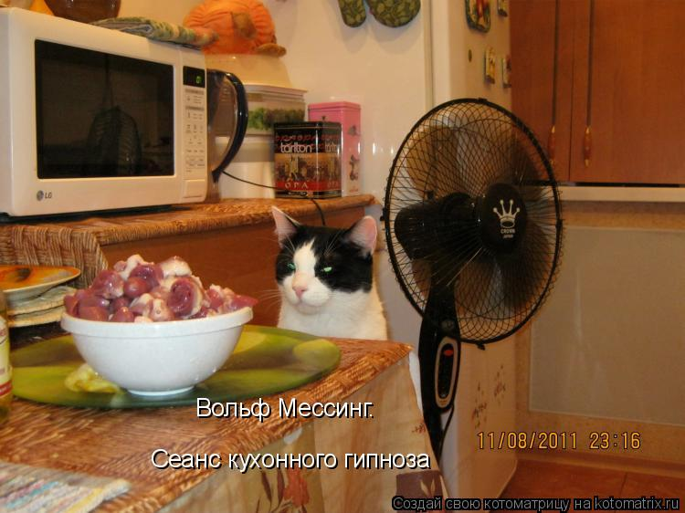 Котоматрица: Вольф Мессинг. Сеанс кухонного гипноза