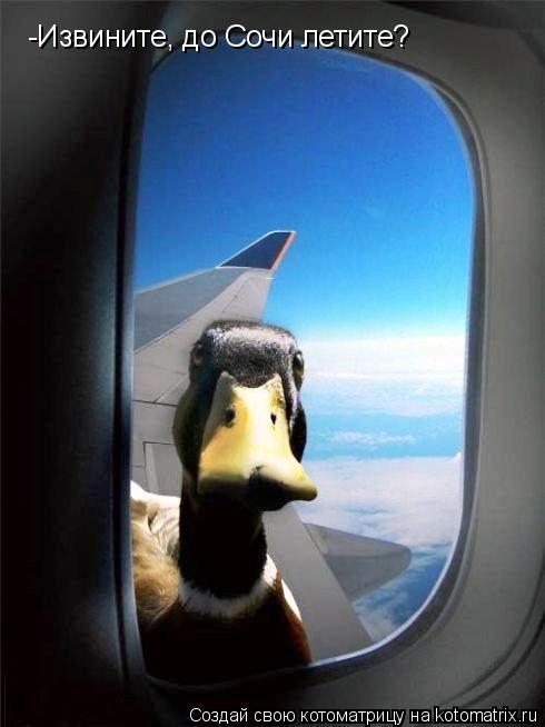 Котоматрица: -Извините, до Сочи летите?