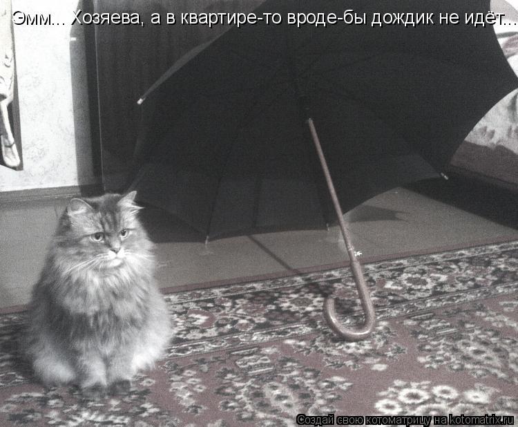 Котоматрица: Эмм... Хозяева, а в квартире-то вроде-бы дождик не идёт...
