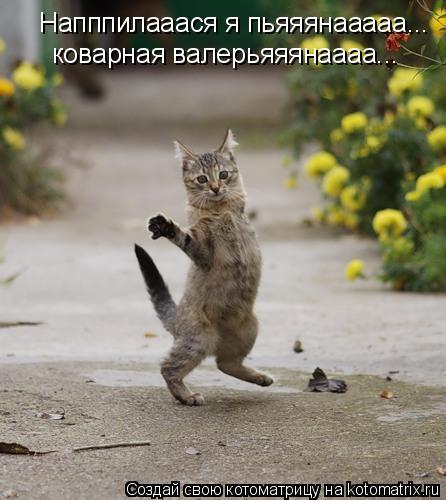 Котоматрица: Напппилааася я пьяяянааааа... коварная валерьяяянаааа...