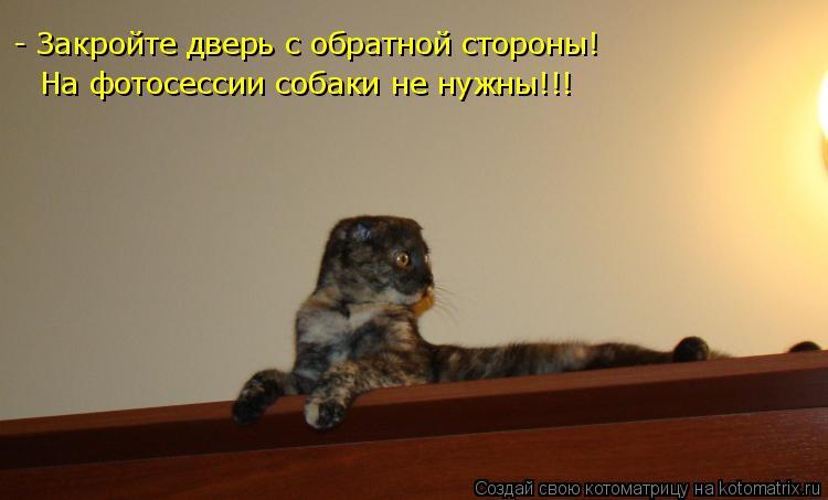 Котоматрица: - Закройте дверь с обратной стороны! На фотосессии собаки не нужны!!!