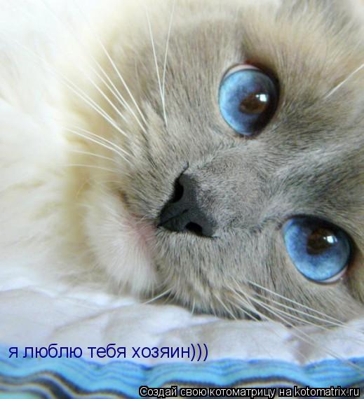 Котоматрица: я люблю тебя хозяин)))