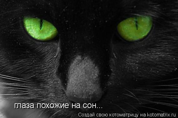 Котоматрица: глаза похожие на сон...