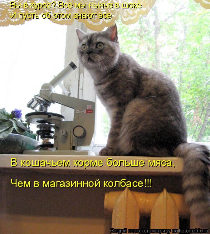 Котоматрица: Вы в курсе? Все мы нынче в шоке И пусть об этом знают все В кошачьем корме больше мяса, Чем в магазинной колбасе!!!