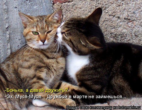 Котоматрица: -Бонька, а давай дружить? -Эх, Муся-Муся... Дружбой в марте не займешься...