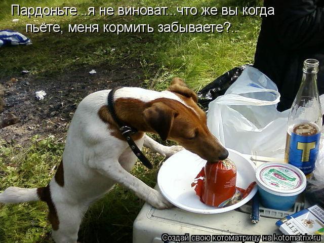 Котоматрица: Пардоньте...я не виноват...что же вы когда пьёте, меня кормить забываете?..