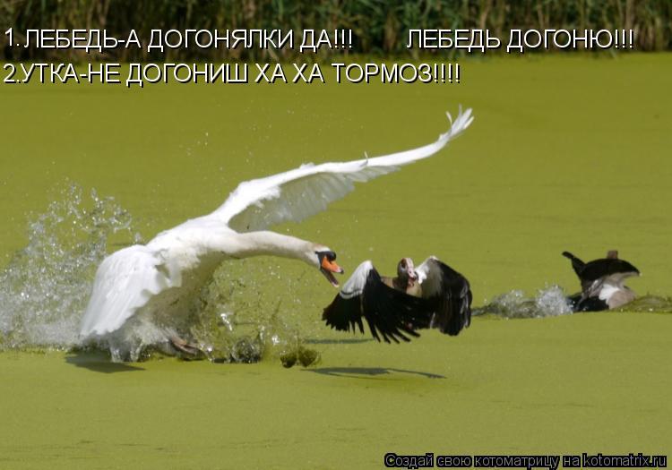 Котоматрица: ЛЕБЕДЬ-А ДОГОНЯЛКИ ДА!!! УТКА-НЕ ДОГОНИШ ХА ХА ТОРМОЗ!!!! 1. 2. ЛЕБЕДЬ ДОГОНЮ!!!