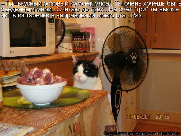 """Котоматрица: --Ты--вкусный розовый кусочек мяса...Ты очень хочешь быть съеденным мной...Считаю до трёх...На счёт """"три"""" ты выско- чишь из тарелки в направлении"""