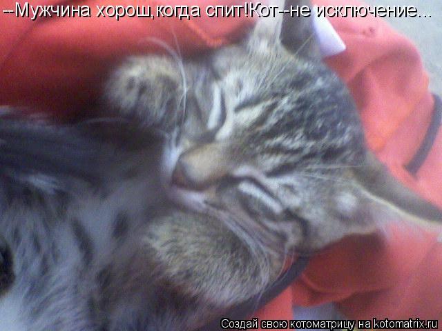 Котоматрица: --Мужчина хорош,когда спит!Кот--не исключение...