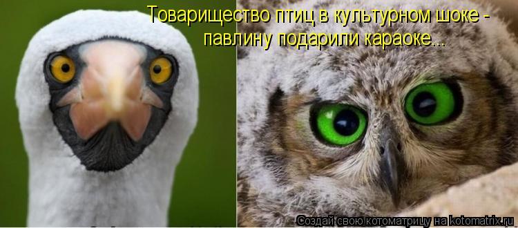 Котоматрица - Товарищество птиц в культурном шоке - павлину подарили караоке...