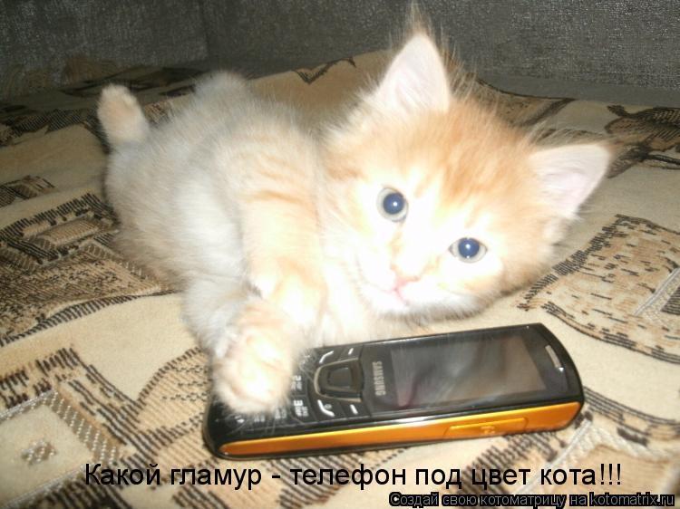 Котоматрица: Какой гламур - телефон под цвет кота!!!