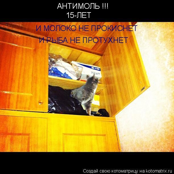 Котоматрица: АНТИМОЛЬ !!! 15-ЛЕТ И МОЛОКО НЕ ПРОКИСНЕТ  И РЫБА НЕ ПРОТУХНЕТ