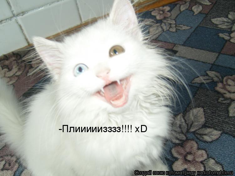 Котоматрица: -Плииииизззз!!!! xD