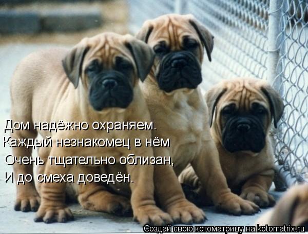 Котоматрица: Дом надёжно охраняем. Каждый незнакомец в нём Очень тщательно облизан, И до смеха доведён.