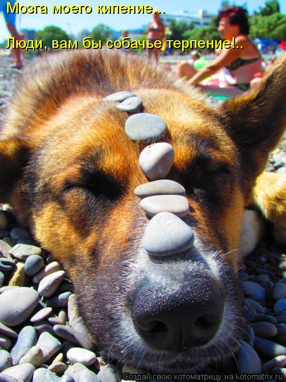 Котоматрица: Мозга моего кипение... Люди, вам бы собачье терпение!..