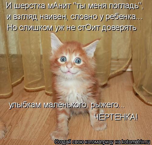 """Котоматрица: И шерстка мАнит """"ты меня погладь"""", и взгляд наивен, словно у ребенка... Но слишком уж не стОит доверять улыбкам маленького, рыжего... ЧЕРТЕНКА!"""