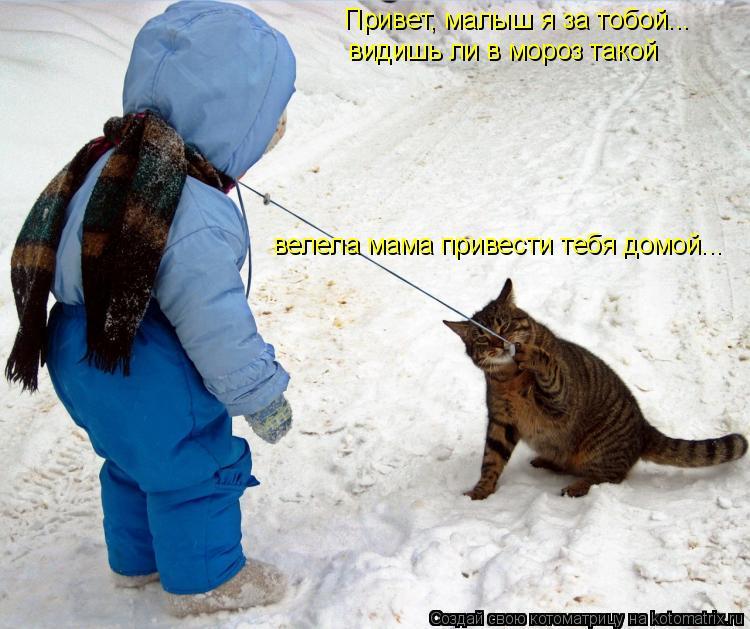 Котоматрица: Привет, малыш я за тобой... видишь ли в мороз такой велела мама привести тебя домой...