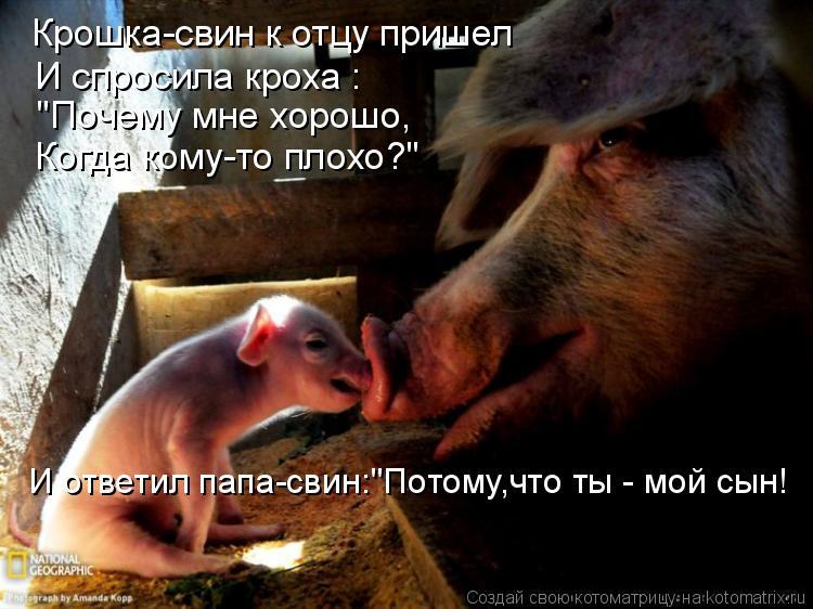 """Котоматрица: Крошка-свин к отцу пришел И спросила кроха :  """"Почему мне хорошо, Когда кому-то плохо?"""" И ответил папа-свин:""""Потому,что ты - мой сын!"""