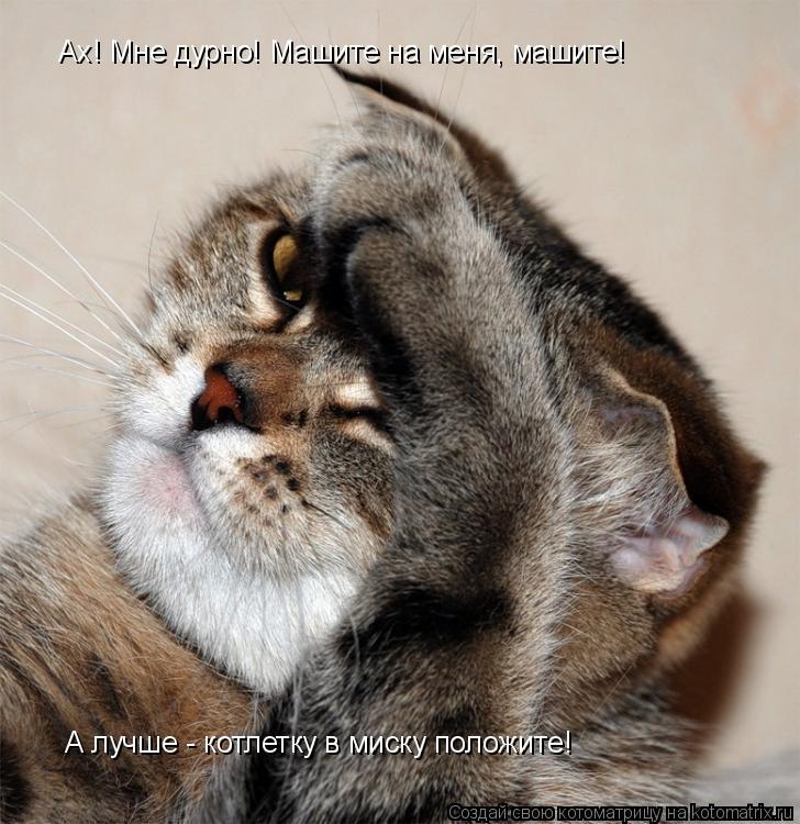 Котоматрица: А лучше - котлетку в миску положите! Ах! Мне дурно! Машите на меня, машите!