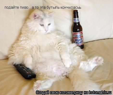 Котоматрица: подайте пиво.. а то эта бутыль кончиласьь