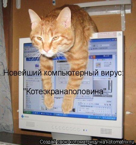 """Котоматрица: Новейший компьютерный вирус: """"Котеэкранаполовина"""""""