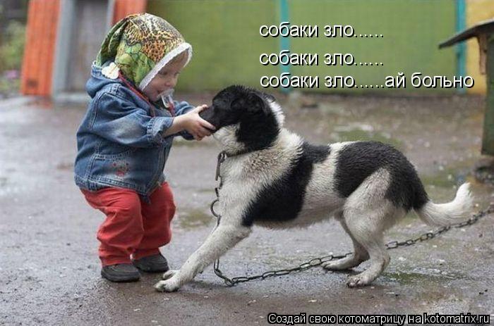 Котоматрица: собаки зло...... собаки зло...... собаки зло......ай больно