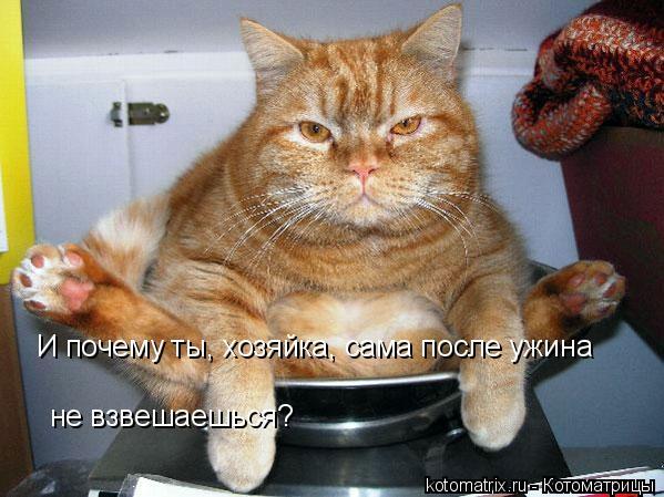 Котоматрица: И почему ты, хозяйка, сама после ужина  не взвешаешься?
