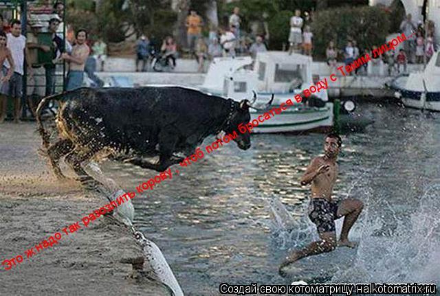 Котоматрица: Это ж надо так разозлить корову , чтоб потом бросаться в воду с Таким лицом Это ж надо так разозлить корову , чтоб потом бросаться в воду с Та