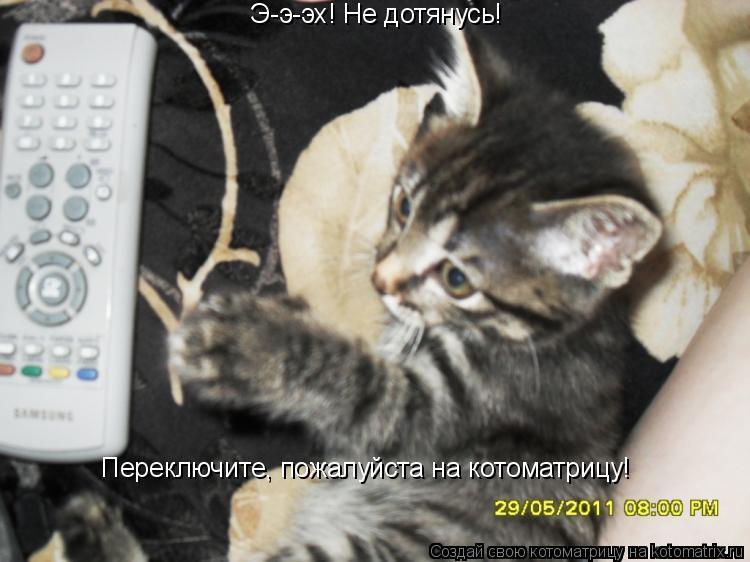 Котоматрица: Э-э-эх! Не дотянусь! Переключите, пожалуйста на котоматрицу!