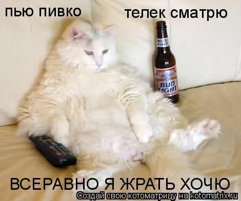 Котоматрица: пью пивко телек сматрю ВСЕРАВНО Я ЖРАТЬ ХОЧЮ