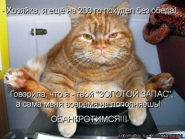 """Котоматрица: - Хозяйка, я ещё на 200 гр похудел без обеда! Говорила, что я - твой """"ЗОЛОТОЙ ЗАПАС"""", а сама меня вовремя не пополняешь! ОБАНКРОТИМСЯ!!!"""