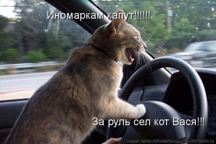 Котоматрица: Иномаркам капут!!!!!! За руль сел кот Вася!!!