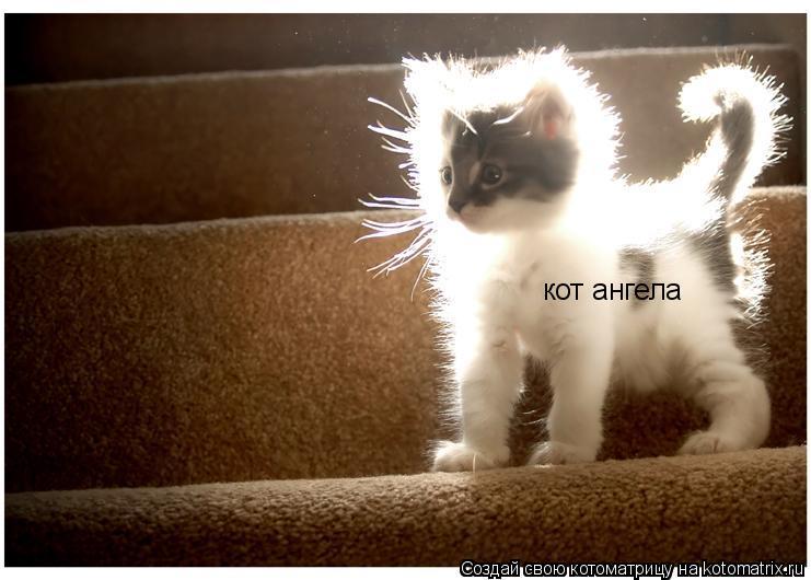 Котоматрица: кот ангела