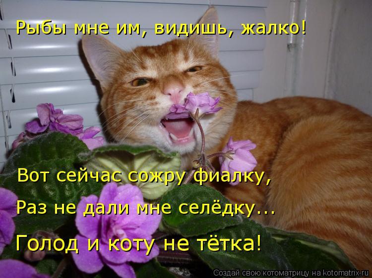 Котоматрица: Рыбы мне им, видишь, жалко! Вот сейчас сожру фиалку,  Раз не дали мне селёдку... Голод и коту не тётка!