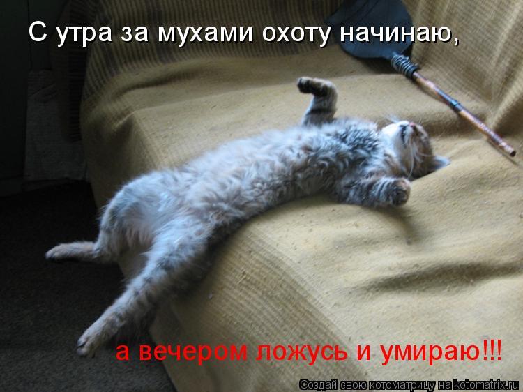 Котоматрица: С утра за мухами охоту начинаю, а вечером ложусь и умираю!!!