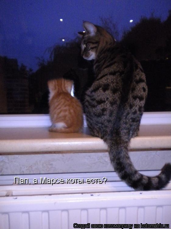 Котоматрица: Пап, а Марсе коты есть?