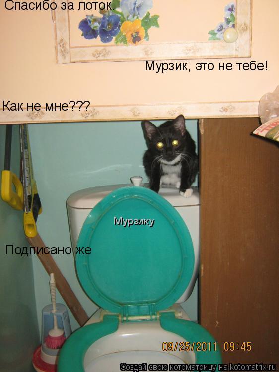 Котоматрица: Спасибо за лоток. Мурзик, это не тебе! Как не мне??? Подписано же Мурзику