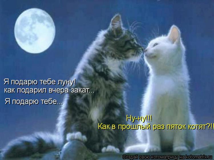 Котоматрица: Я подарю тебе луну! как подарил вчера закат... Я подарю тебе... Ну-ну!!! Как в прошлый раз пяток котят?!!
