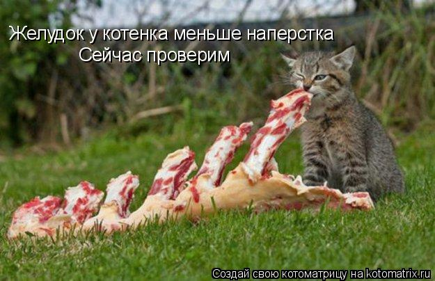 Котоматрица: Желудок у котенка меньше наперстка Сейчас проверим