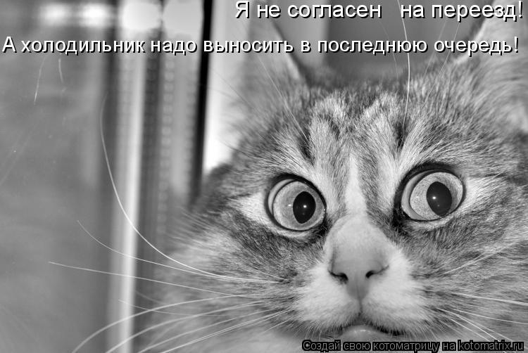 Котоматрица: Я не согласен   на переезд! А холодильник надо выносить в последнюю очередь!