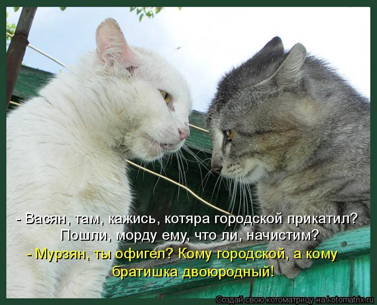 Котоматрица - - Васян, там, кажись, котяра городской прикатил? Пошли, морду ему, что