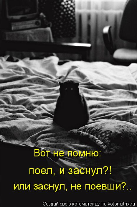 Котоматрица - Вот не помню: поел, и заснул?! или заснул, не поевши?..