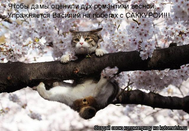 Котоматрица: - Чтобы дамы оценили дух романтики весной... - Упражняется Василий на побегах с САККУРОЙ!!!