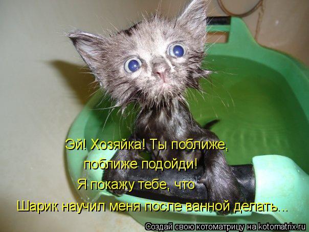 Котоматрица: Эй! Хозяйка! Ты поближе, поближе подойди! Я покажу тебе, что Шарик научил меня после ванной делать...