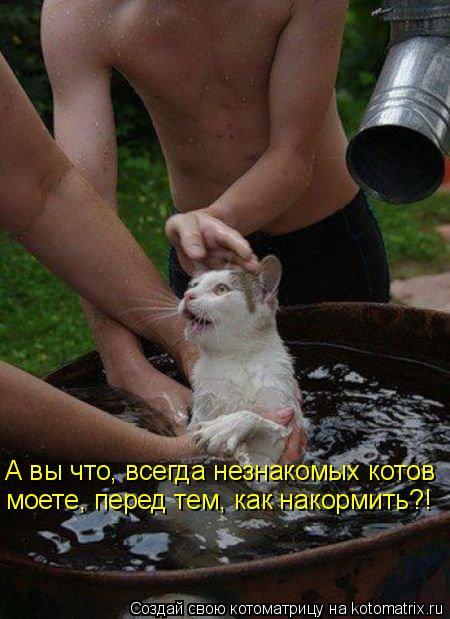 Котоматрица - А вы что, всегда незнакомых котов моете, перед тем, как накормить?!