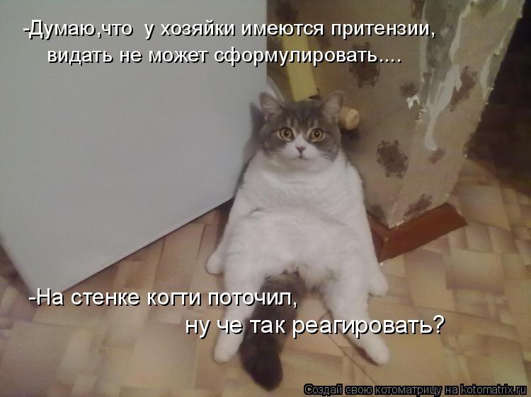 Котоматрица: -Думаю,что  у хозяйки имеются притензии, видать не может сформулировать.... -На стенке когти поточил, ну че так реагировать?