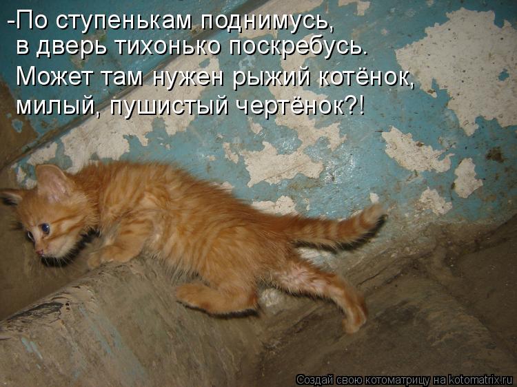 Котоматрица: -По ступенькам поднимусь, в дверь тихонько поскребусь. Может там нужен рыжий котёнок, милый, пушистый чертёнок?!