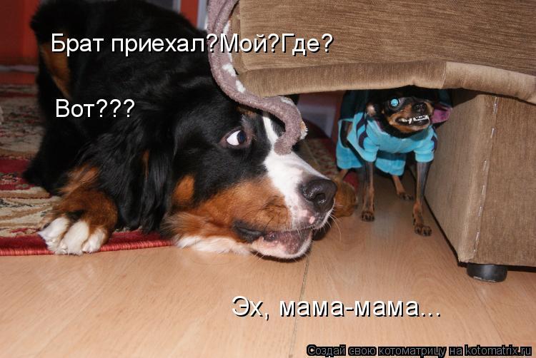 Котоматрица: Брат приехал?Мой?Где? Вот??? Эх, мама-мама...